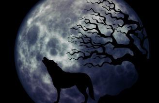 wolf-963107_1920
